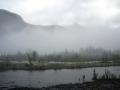 Foggy river bank