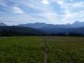 Trail through mountain wildflowers